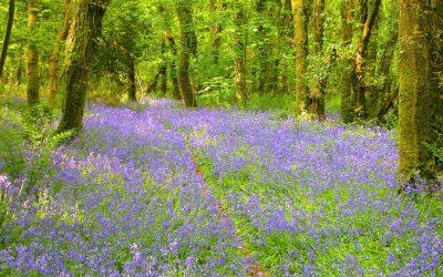 Cornish Rural Peace – Cutkive Wood Holiday Lodges