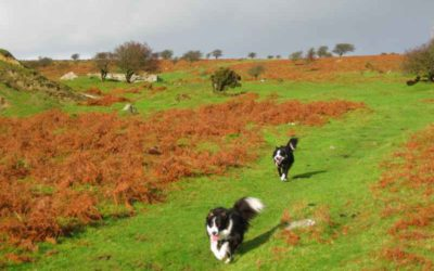 Dog Friendly Holidays Cornwall – Dogs Like Being on Holiday Too!