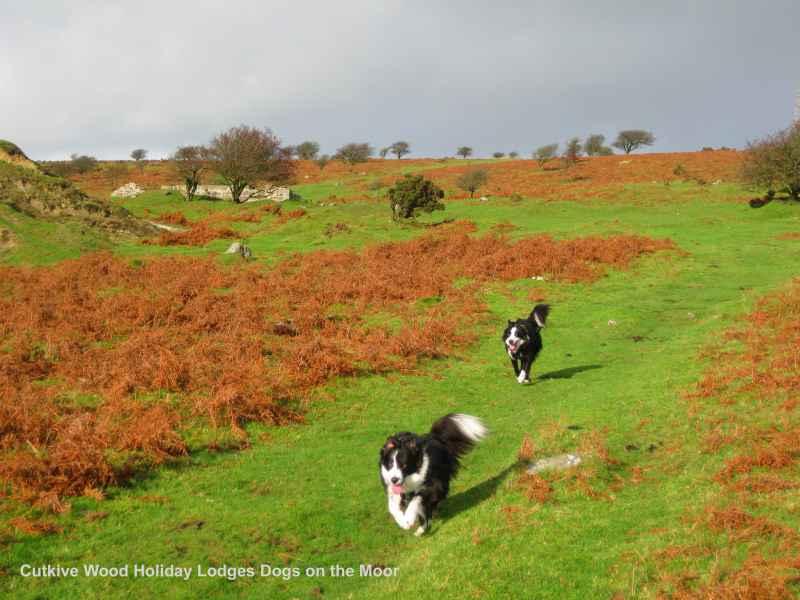 Dog Friendly Holidays Cornwall