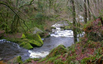 Natural Beauty on Your Doorstep; Cutkive Wood Holiday Lodges